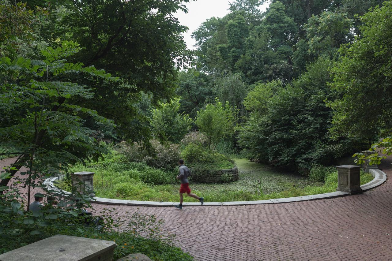 Abandoned Garden.jpg