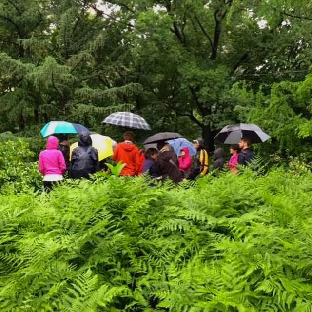 Two_Tuesday_s_ago_while_the_majority_of_New_Yorkers_hunkered_down_inside_their_apartments_this_intrepid_group_of_nature_lovers_joined_urban_naturalist_Ken_Chaya_on_a_tree_identification_walk_through__CentralPark.___noexcuses__mudisgoodforyou__thegrea.jpg
