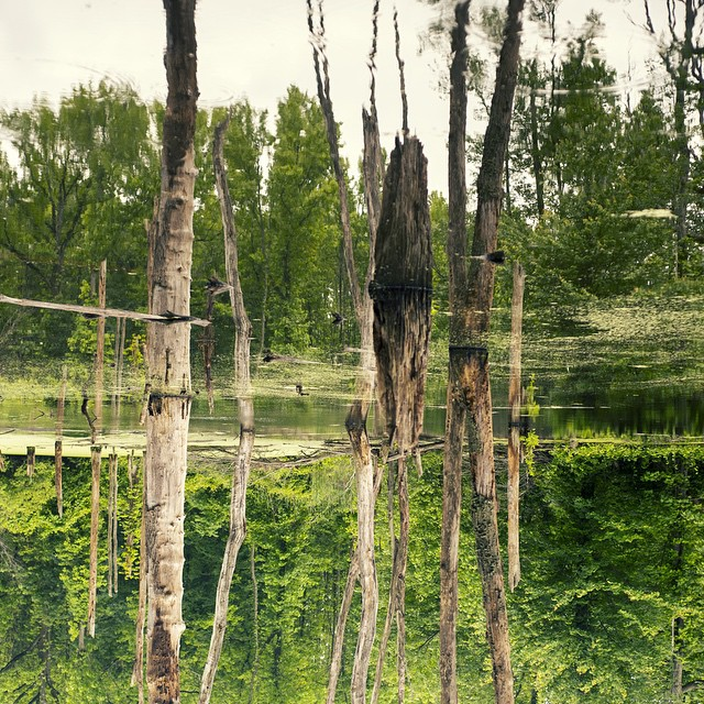 Alien_landscape.__hiking__statenisland__swamp__nature__nofilter__OFNYC15__trippix__reflection__escapingthecity_by_mo_skel.jpg