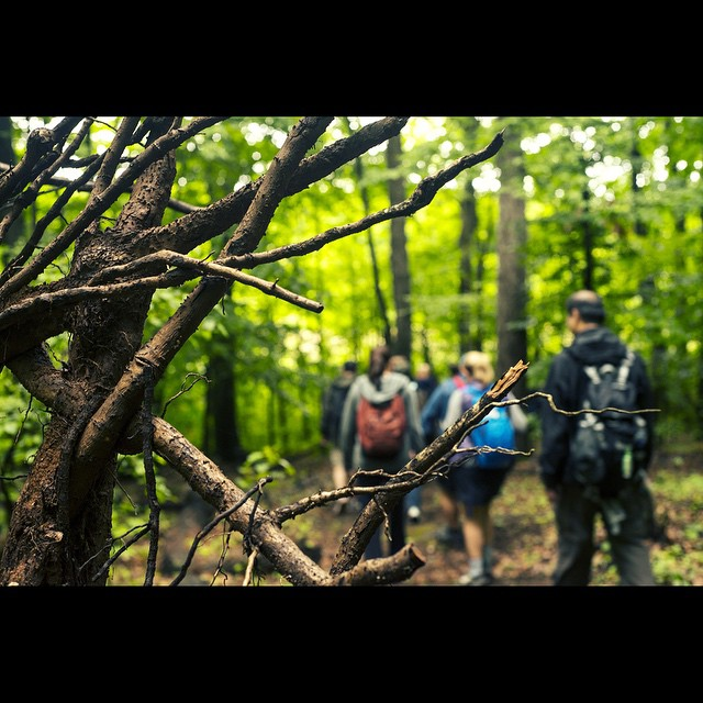 Hiking_Mt._Loretto.__trippix__ofnyc15__hiking__roots__nature__forest__statenisland__escapingthecity_by_mo_skel.jpg