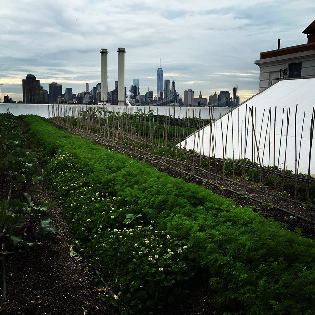 The_view_from_class_last_night_at__brooklygrange_-_a_local_farm_at_the_Brooklyn_Navy_Yard___So_cool__Thank_you_OutdoorFest_and__popupyoganyc_for_the_awesome_opportunity._And_a_special_thanks_to_everyone_who_came_out_last_night___outdoorfest2015__popu.jpg