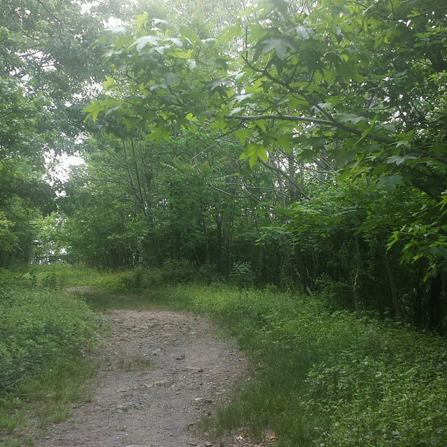 Beginning_on_the_Long_Path__outdoorfest__OFNYC15__trippixapp_by_travel.by.design.jpg