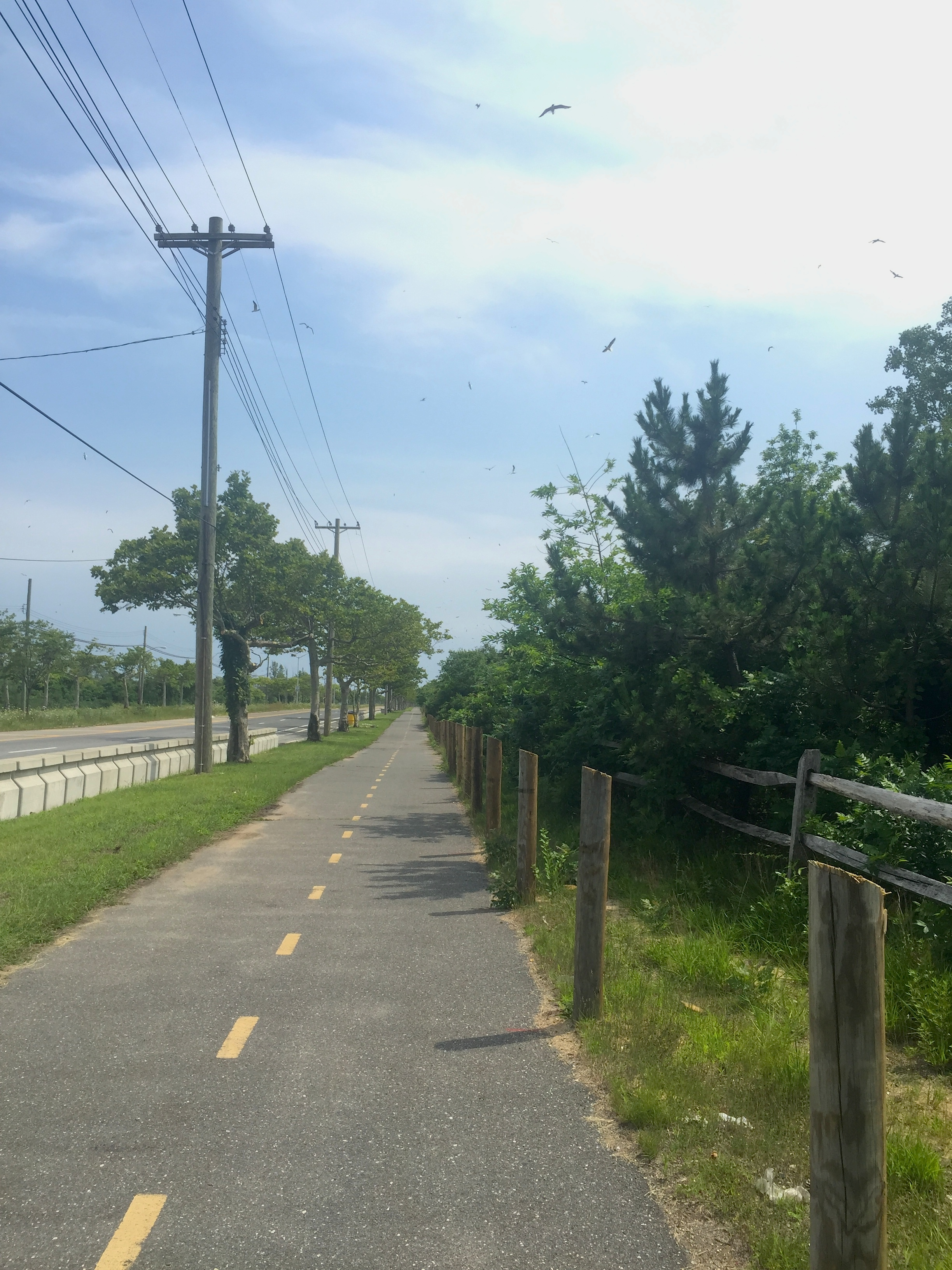 Photo of the Jamaica Bay Greenway by Sarah L. Knapp
