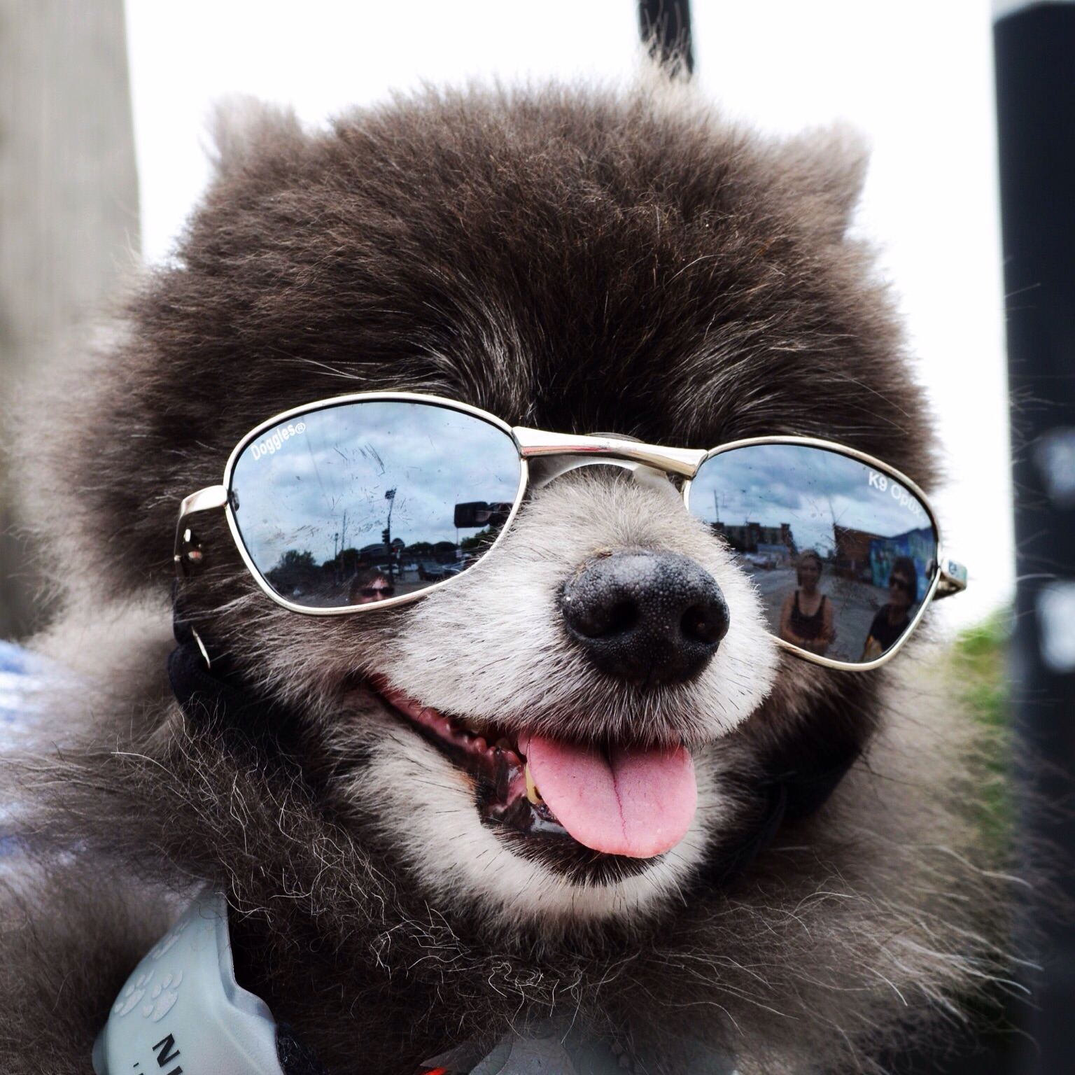 Canine cool in Deep Ellum