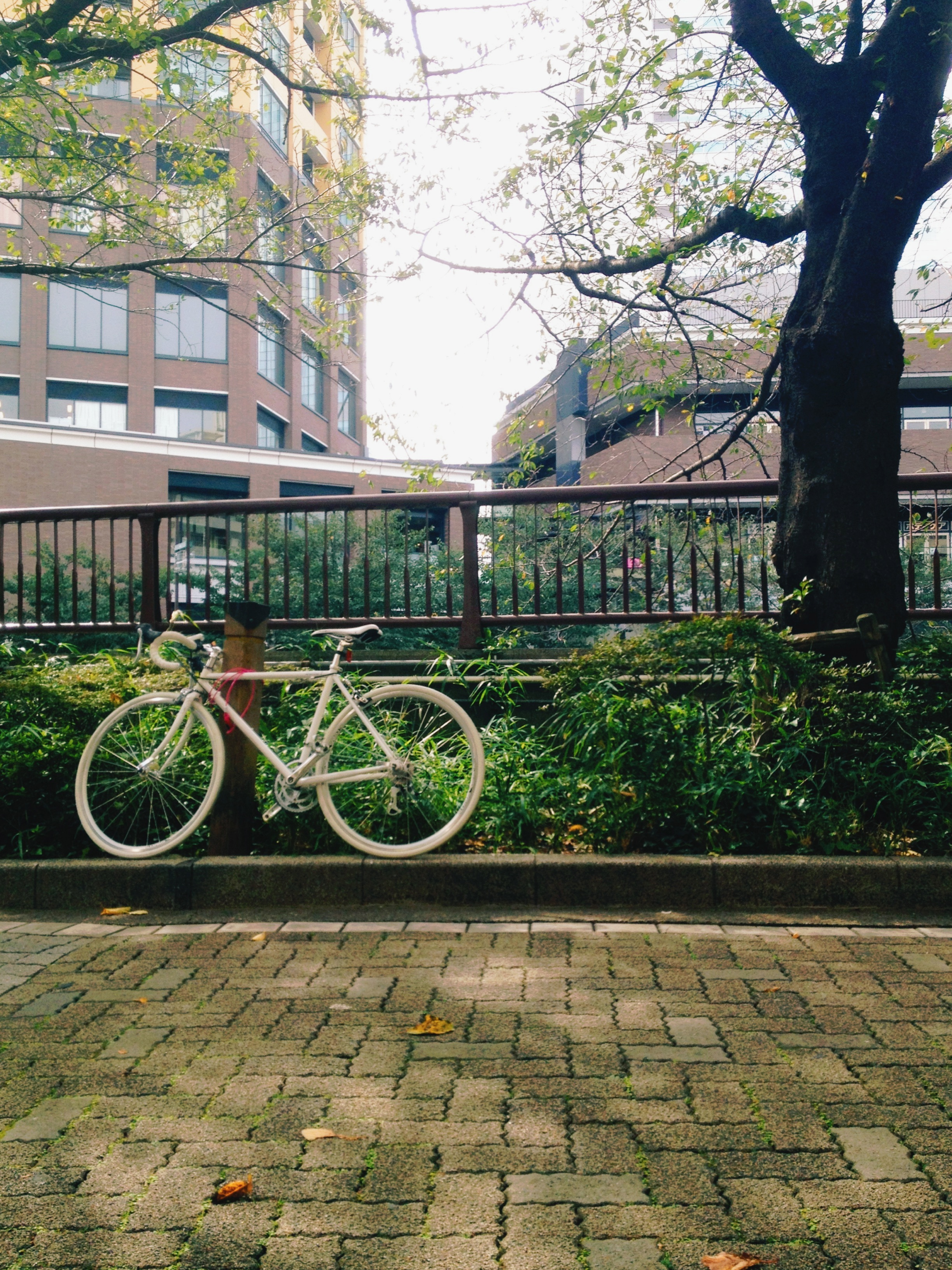 Bicycle by the canal in Meguro