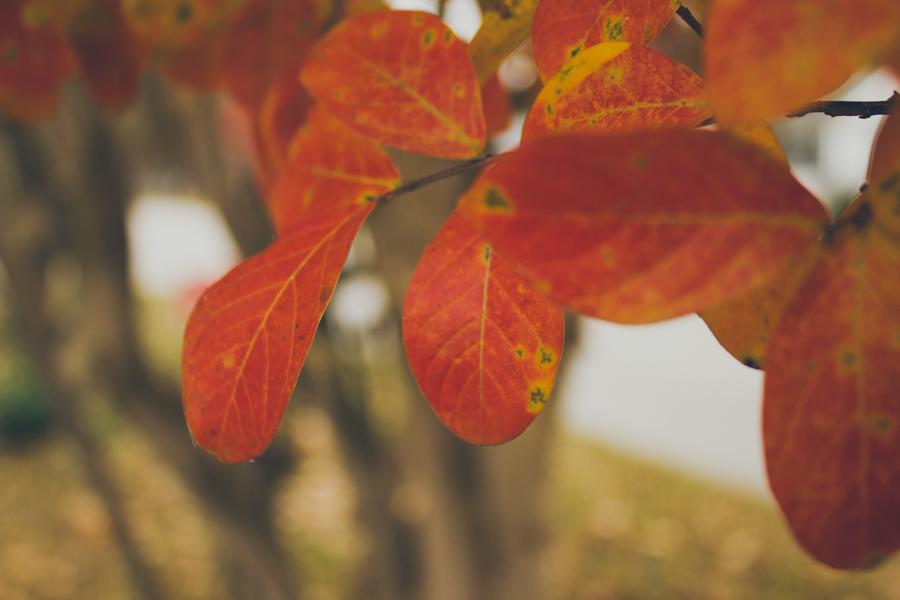 Fall :: The Arrow House