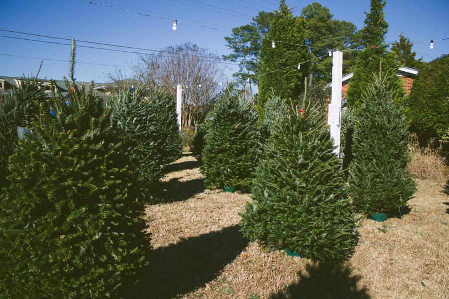 Christmas Trees : The Arrow House