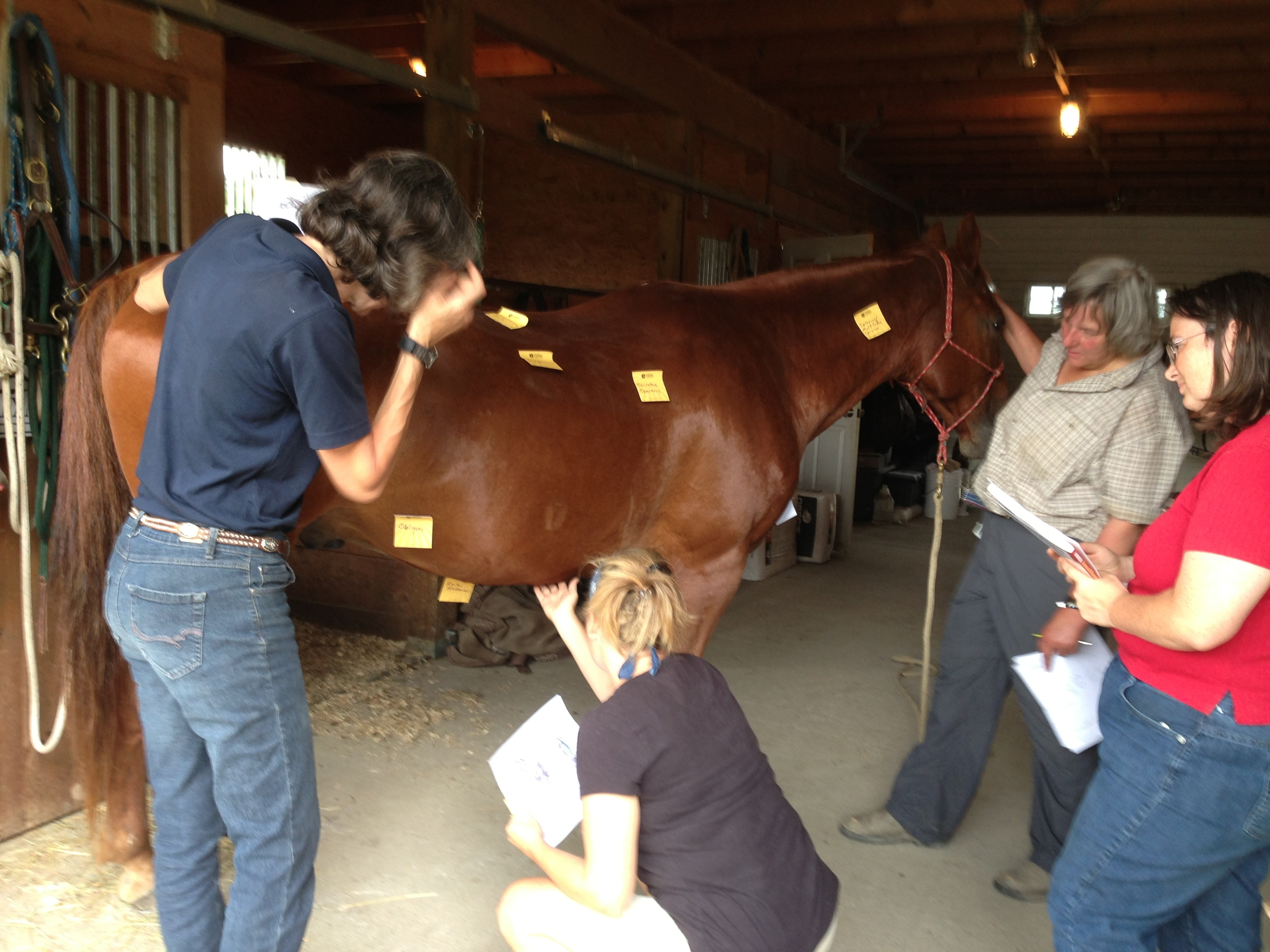 Students taking the day to learn more about horse anatomy - Find a community of follow horse people committed to constantly bettering themselves for the well being of the horses in their lives.