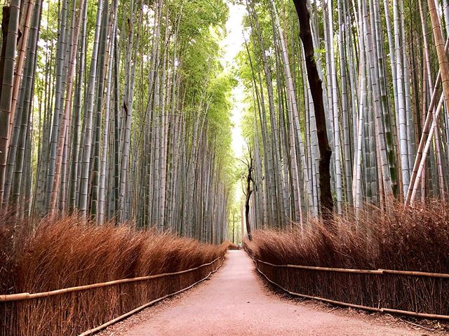Hello Kyoto #kyoto #bambooforest #japan #iphone