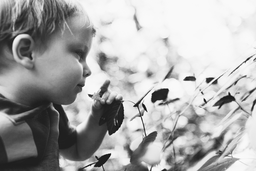 Eloise Butler Wildflower Garden Children Photos
