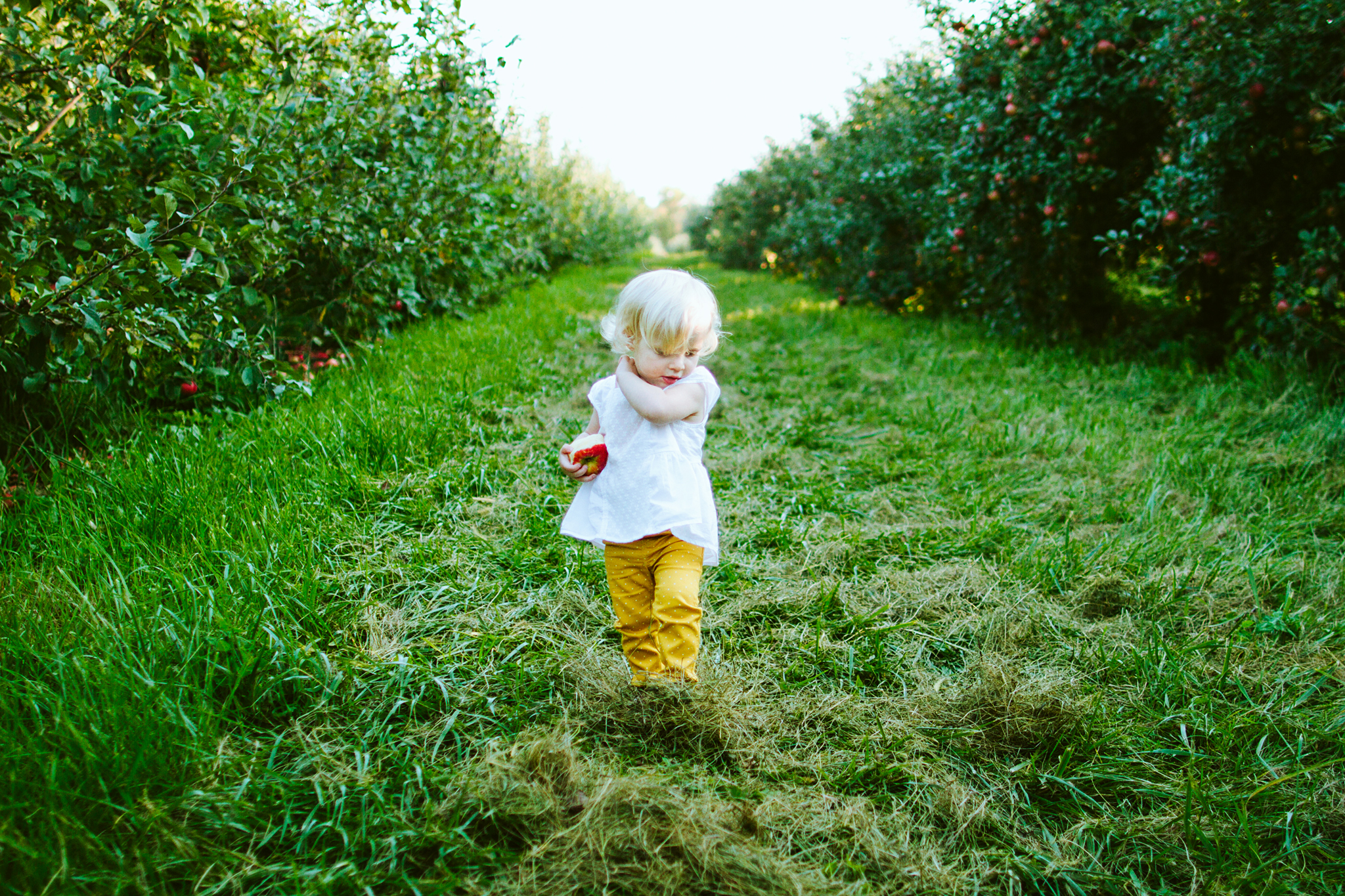 Top Apple Orchards near the Twin Cities, Minnesota
