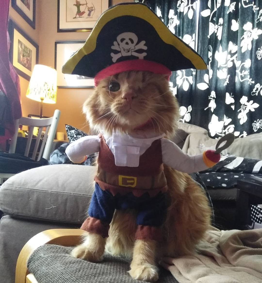 Oops! - Ahoy, matey! Looks like the page you were looking for has walked the plank. Sorry about that!