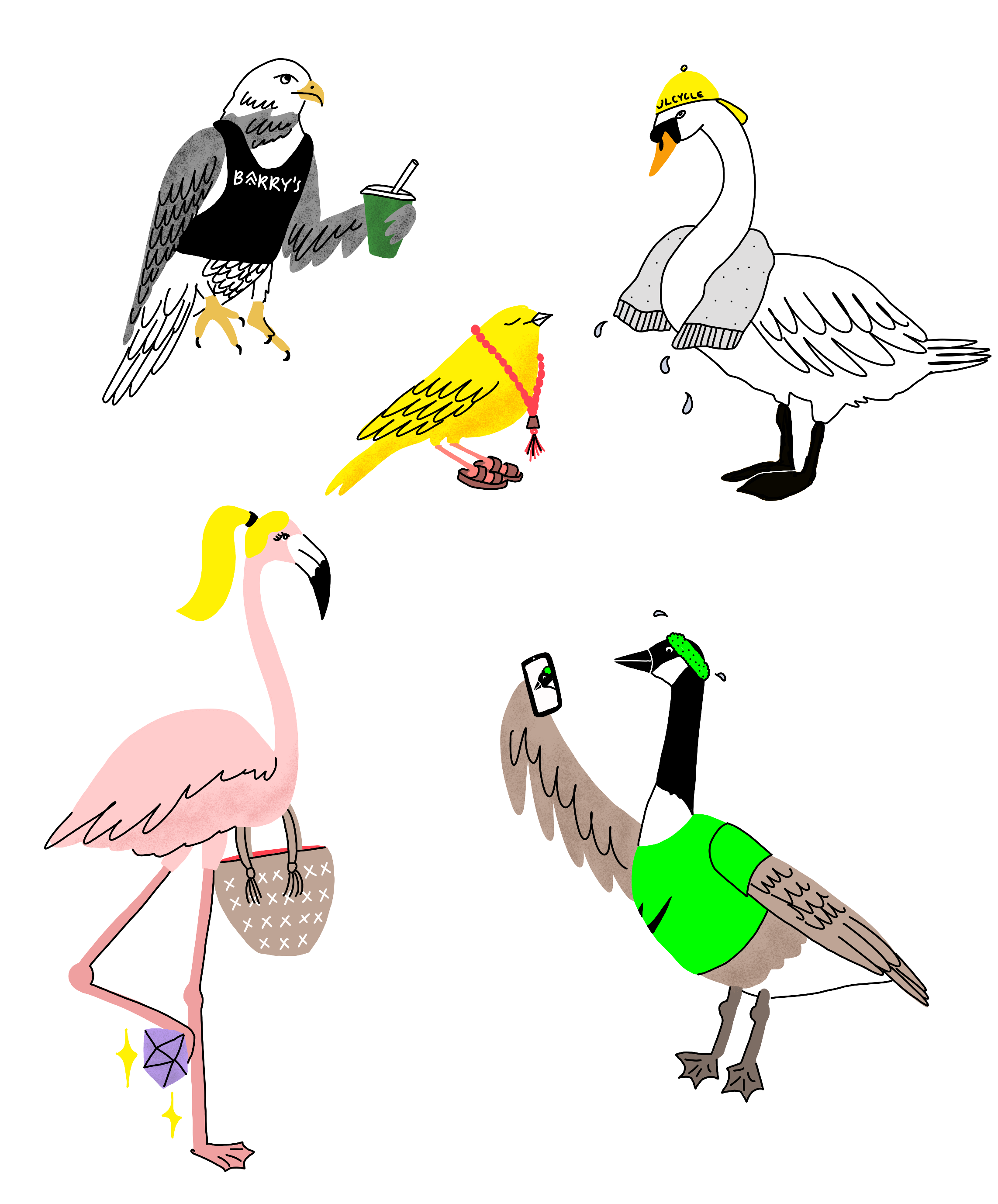 Fitness_Birds.png