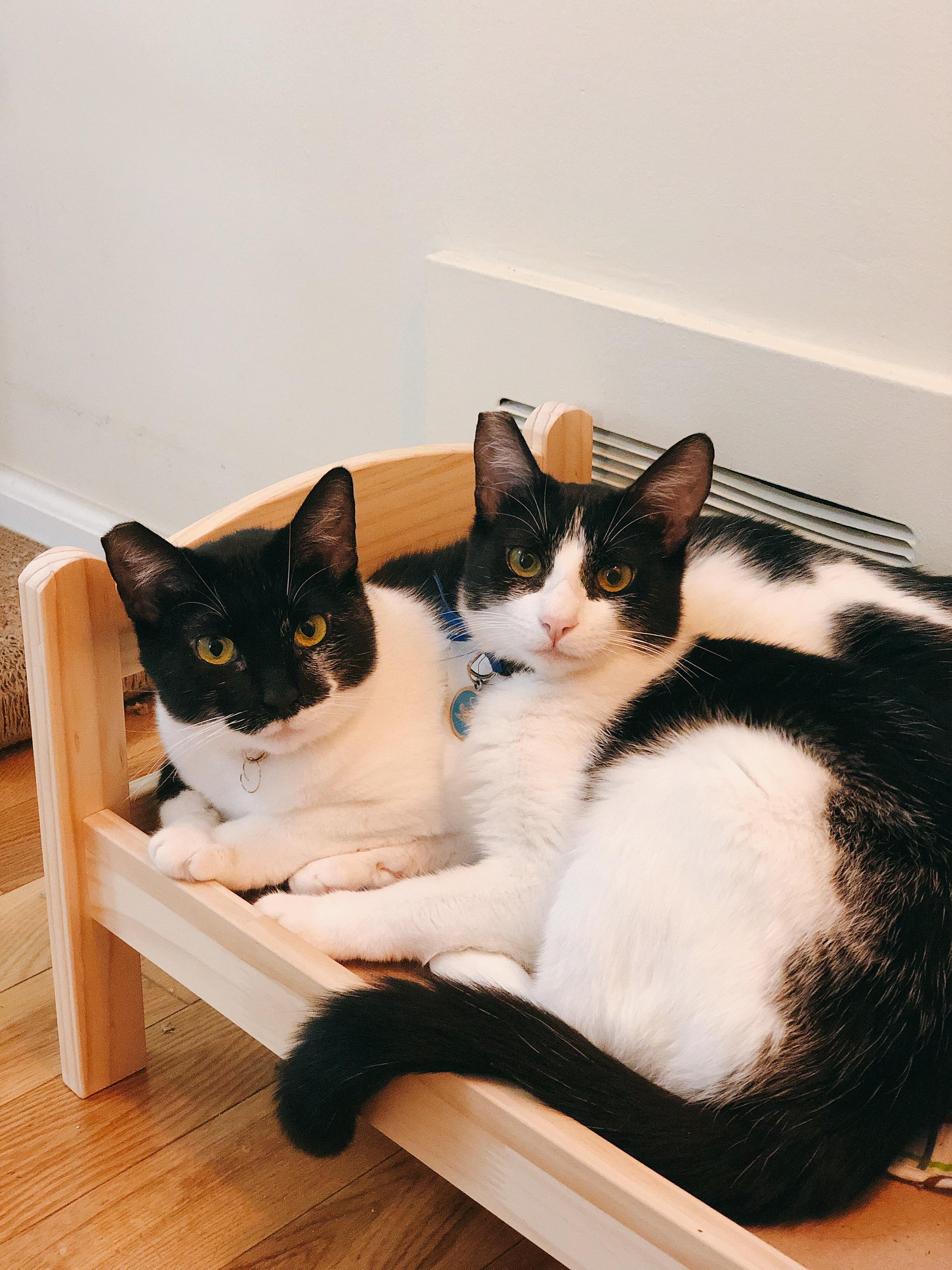 Oreo and Cookie - needs a home ASAP (LA | OC)