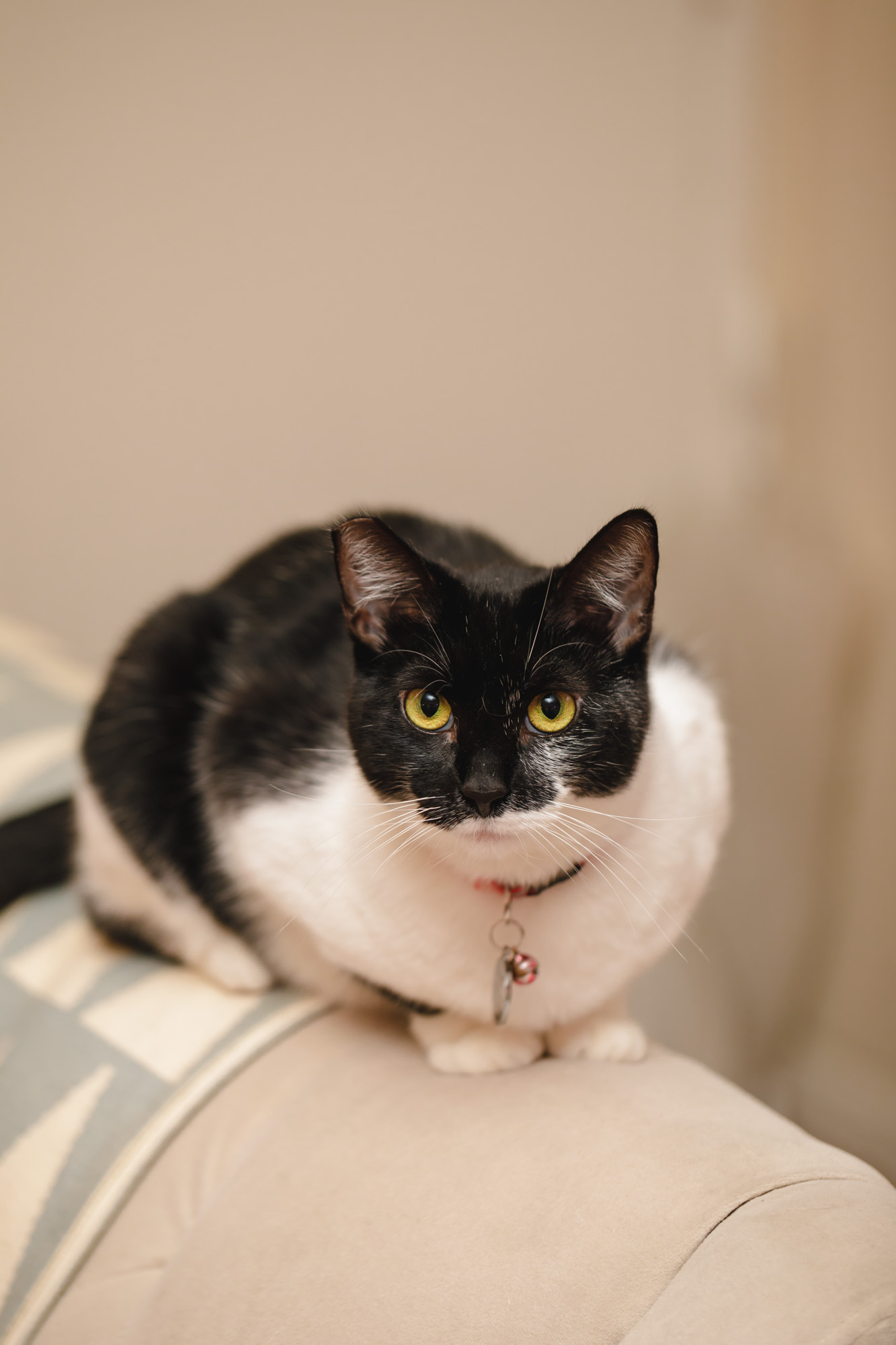 Oreo - Mother, maybe 2 years old, spayed, cleaned. She's extremely friendly and easy to play with. Loves getting pet around the lower back and will purr as soon as she lays next to you