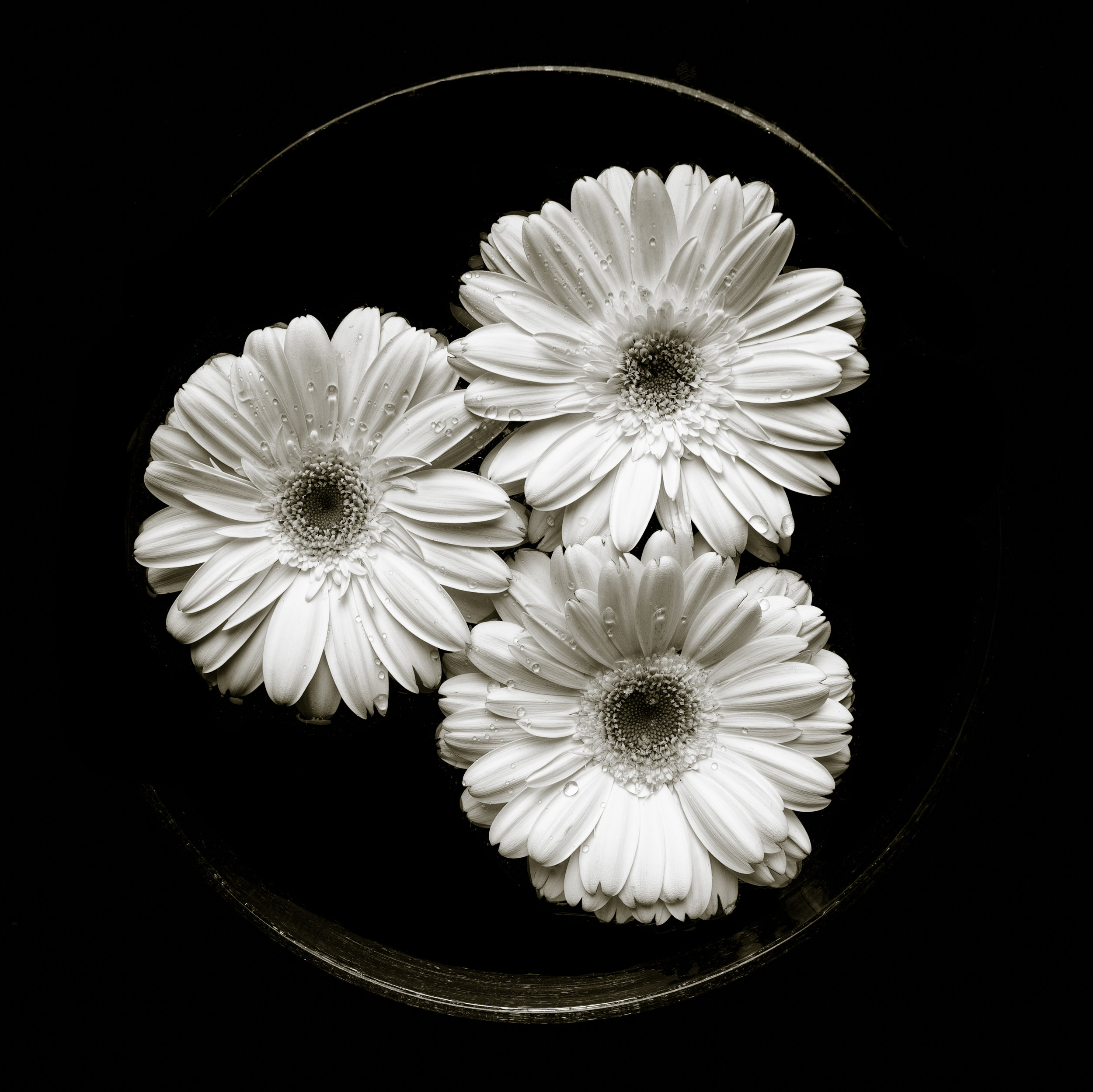 Black white gerbera daisy circular arrangement three eyes