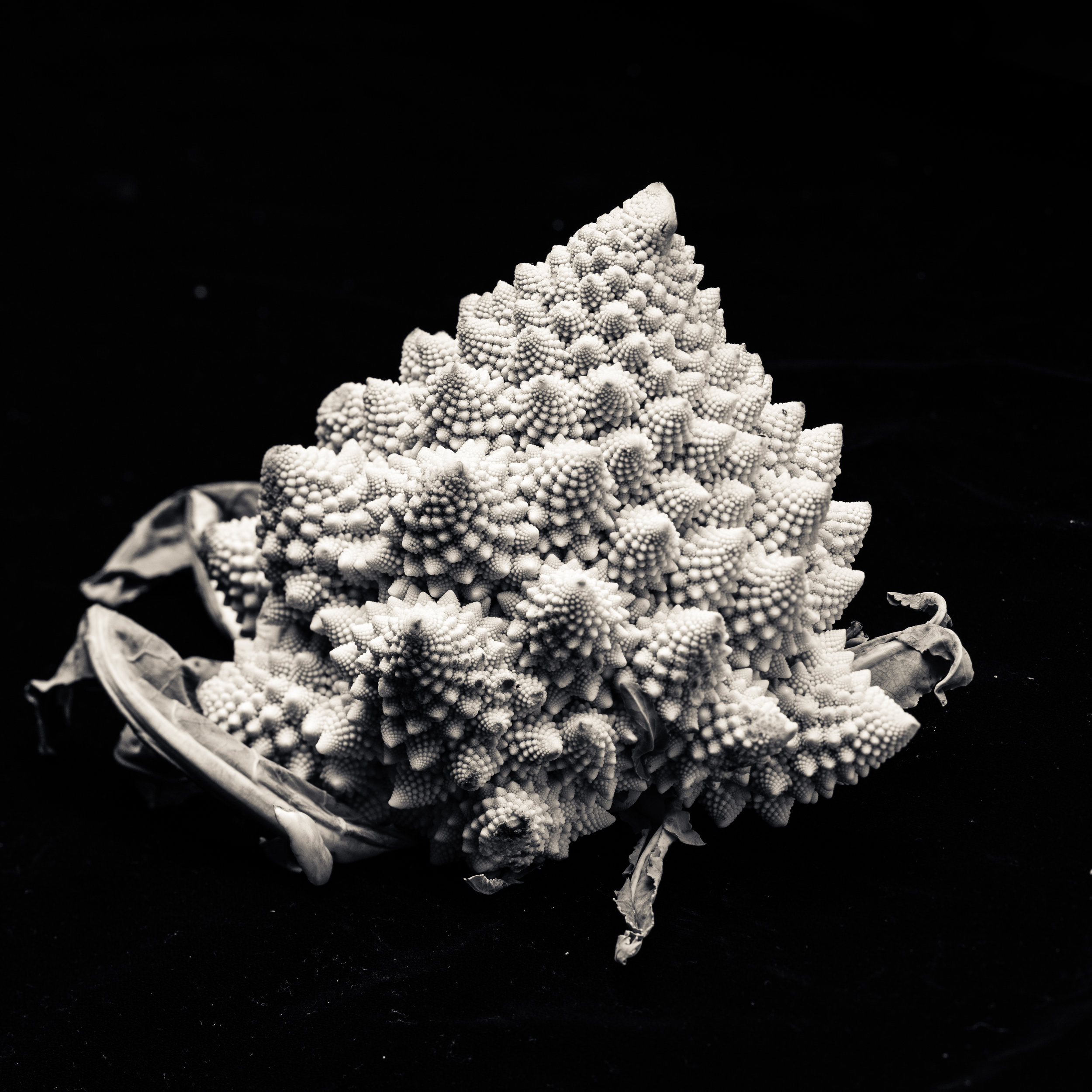 Black white romanesco broccoli fractal pattern