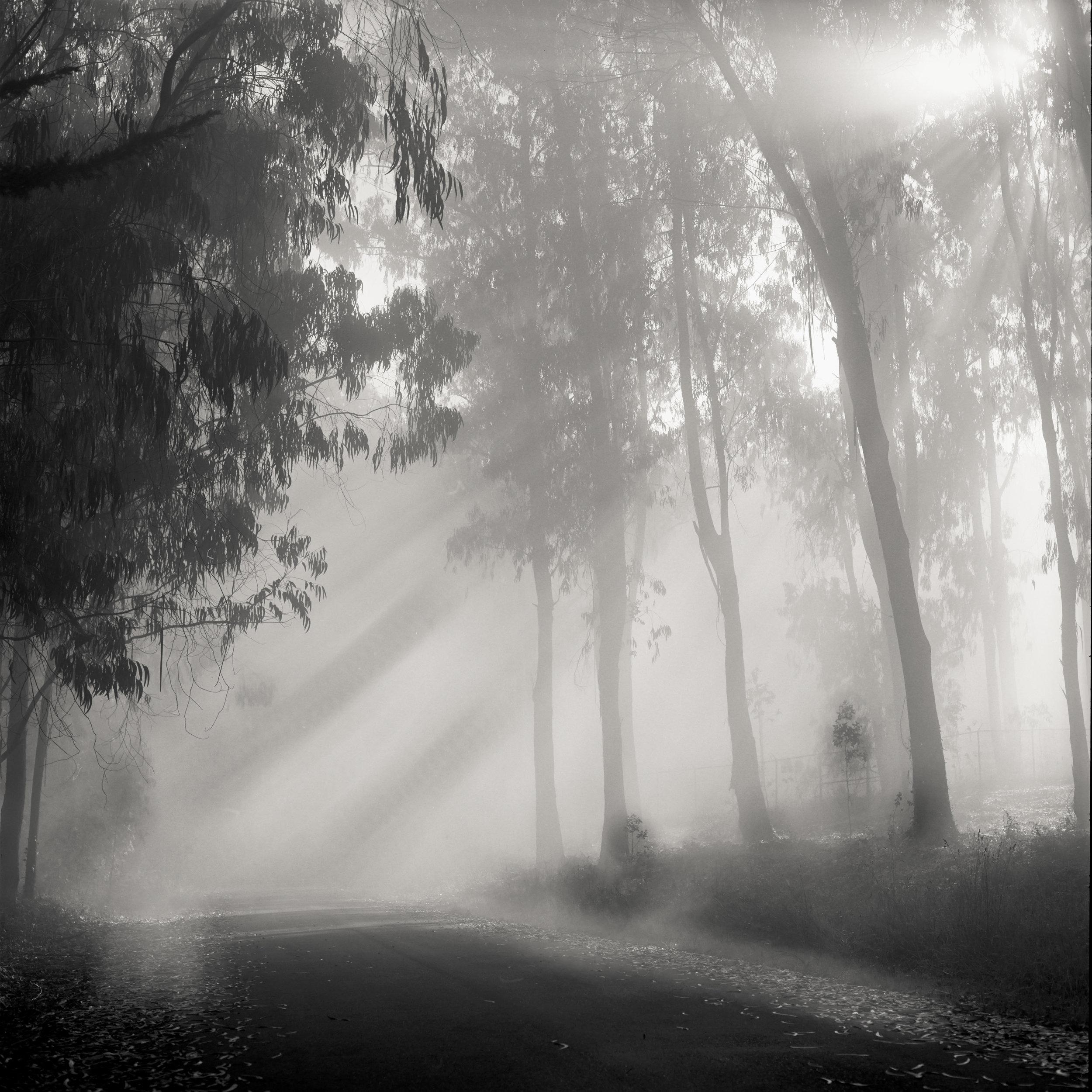 San Francisco presidio black white fog mist trees empty road