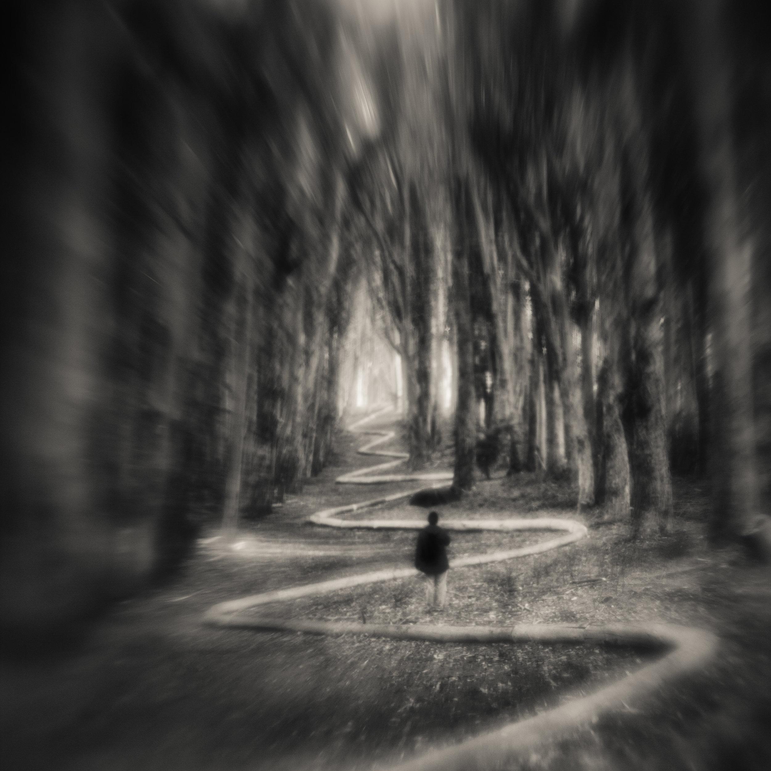 San Francisco presidio goldsworthy wavy line path forest blur figure