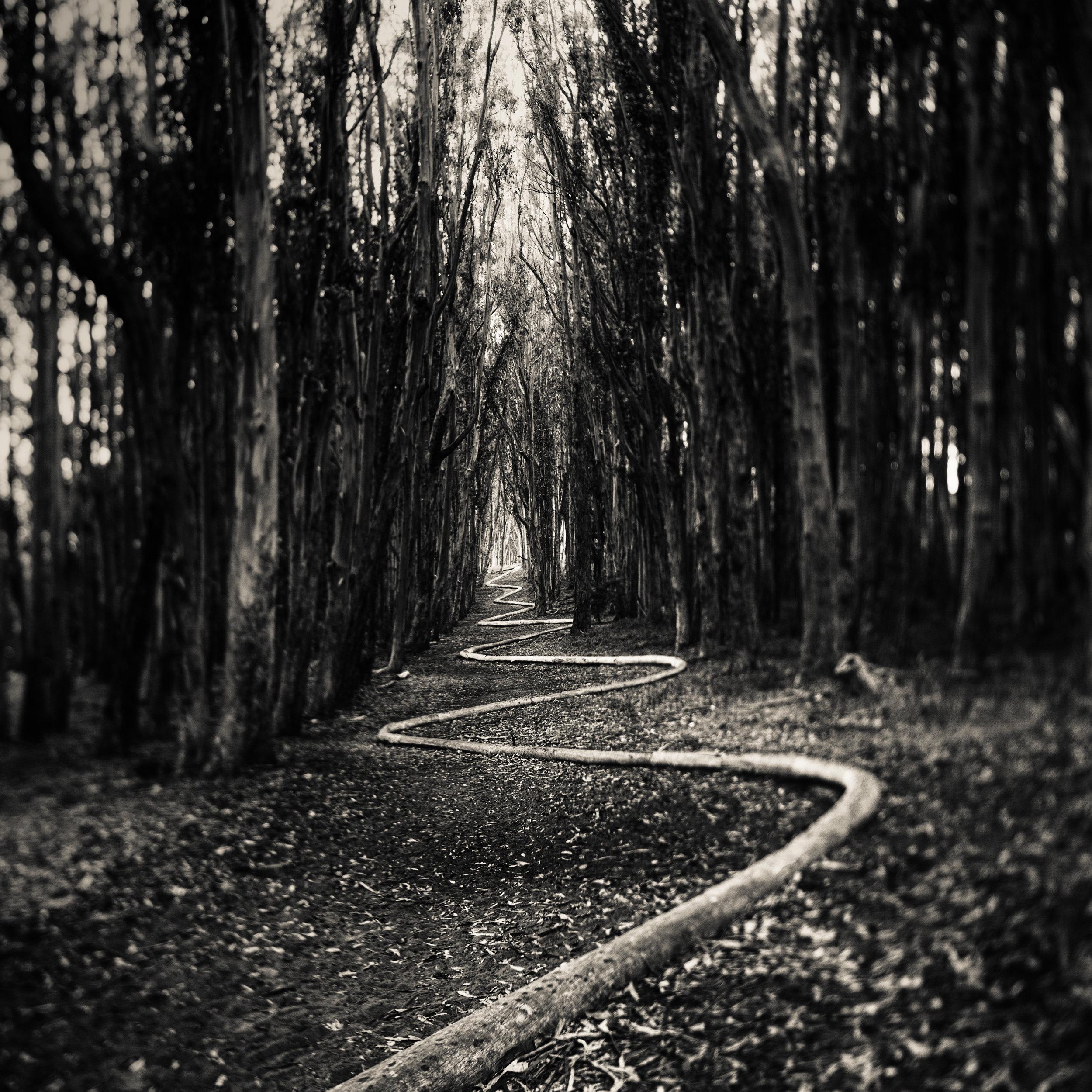 San Francisco presidio goldsworthy wavy line path forest