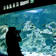 Copy of Visitor Experience Analysis - Sydney Aquarium