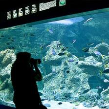 Visitor Experience Analysis - Sydney Aquarium