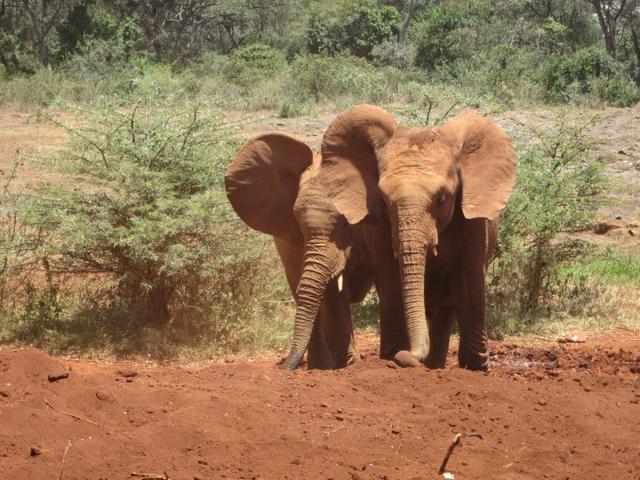 NAIROBI2013_16.jpg