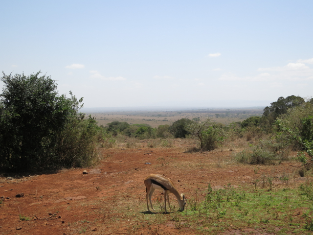 NAIROBI2013_10.jpg