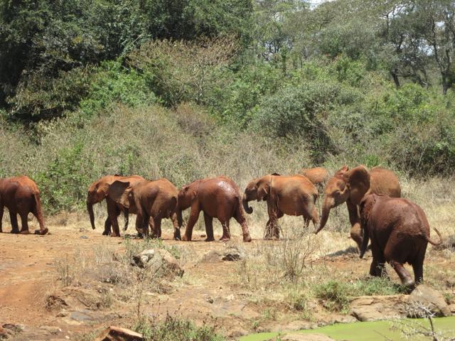 NAIROBI2013_14.jpg