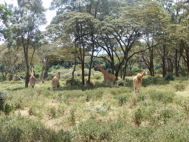 NAIROBI2013_08.jpg