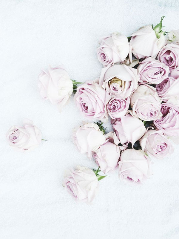 pale lilac roses