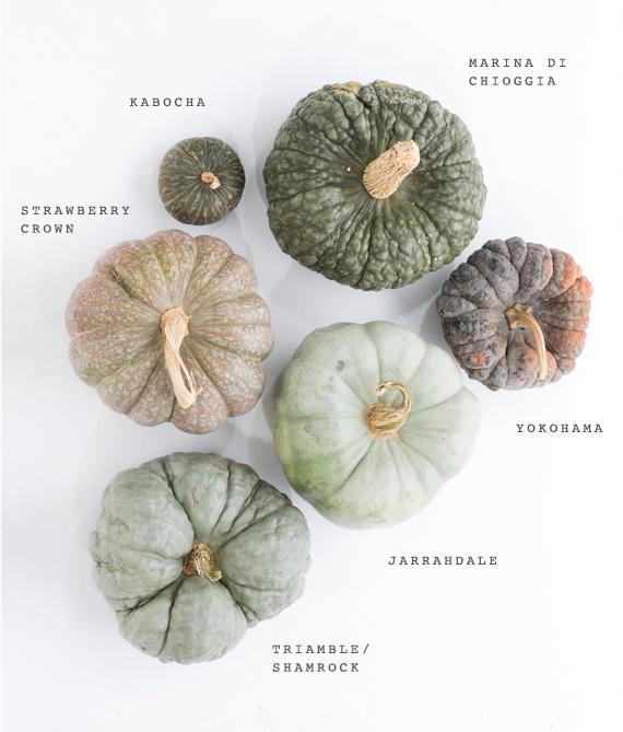 Autumn Inspiration : Heirloom Pumpkin Varieties