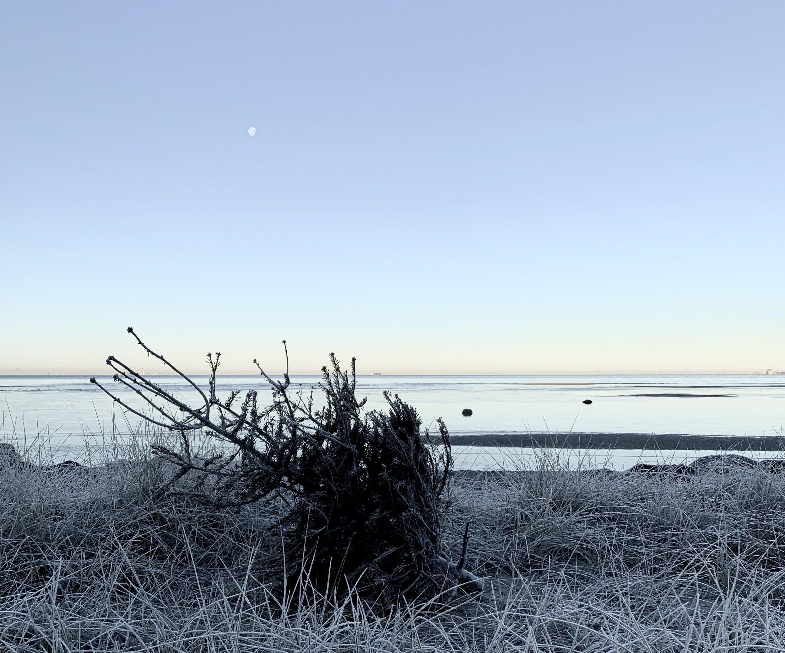 Den här veckan startade med en riktigt fin och första vinterdag. Den bjöd ut mig på en underbar morgonpromenad innan jobbet.