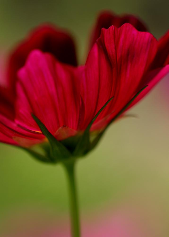 Copyright GusThomas -8094.jpg
