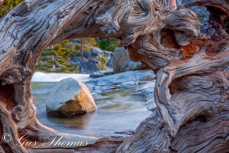 Tree Hole with a rock