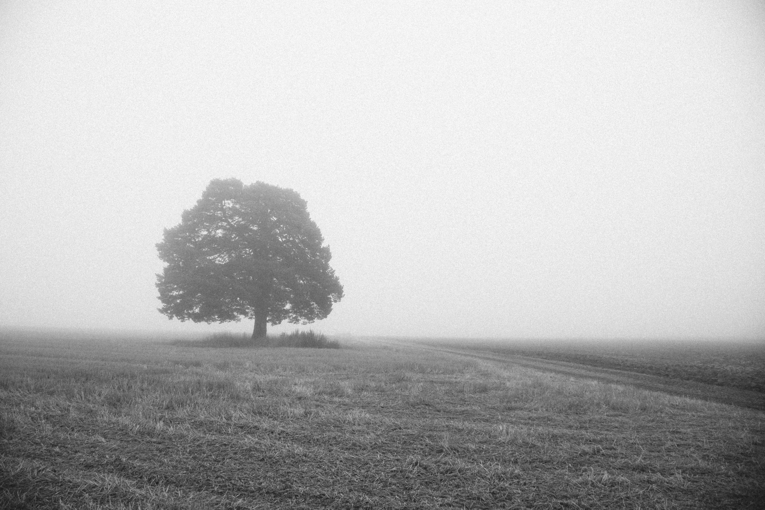 001 tre i svart hvitt.jpg