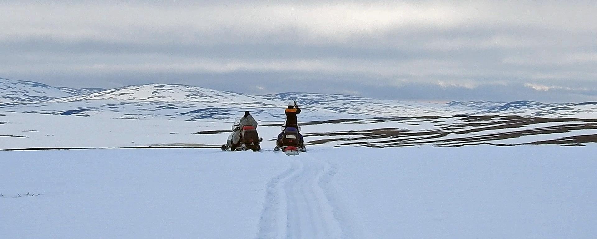Kalveprosjektet går sin gang og oppsynet følger med. Foto: Olav Strand, Norsk institutt for naturforskning (NINA)