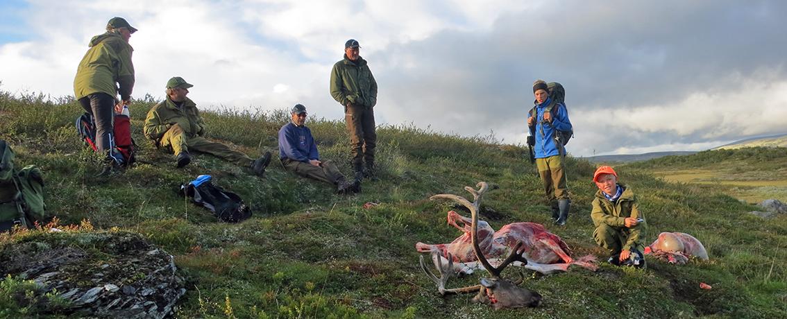 """Alle som feller villrein i Forollhogna i høst, må svare på spørsmålene som stilles i """"Jegerundersøkelsen"""" (deles ut sammen med jaktkortene). Ill.foto fra jakta i 2014: Arne Nyaas"""