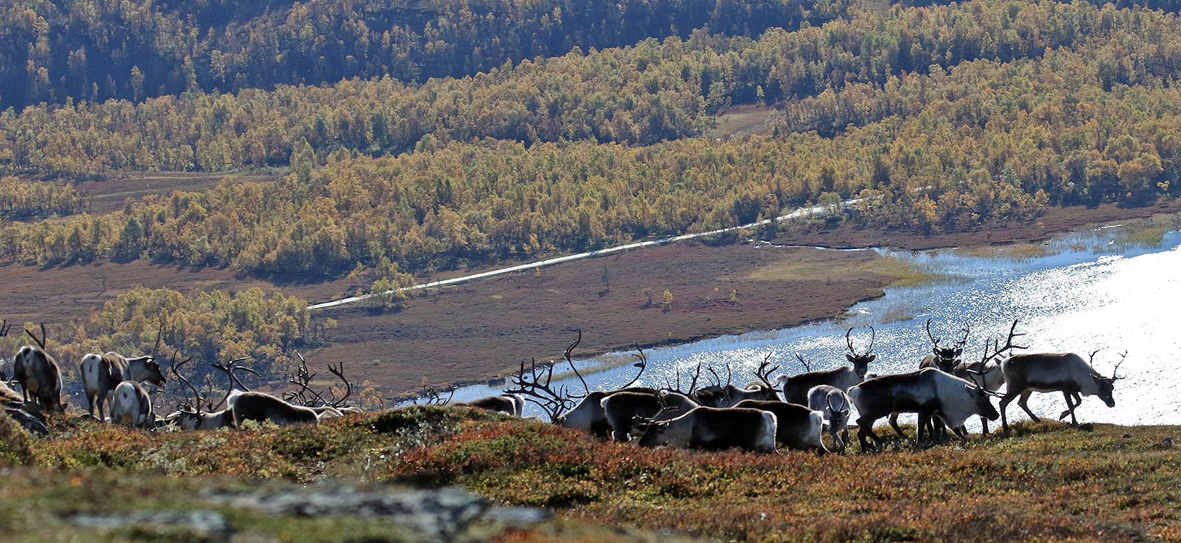 I dette innlegget redegjør styringsgruppa i FO1 om overgangsavtalene under årets villreinjakt. Arkivfoto fra Kvikne (Plasseterveien og Svartsjøen i bakgrunnen):  Arne Nyaas