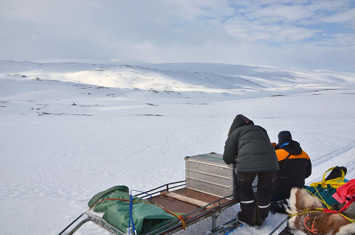 Telling av flokk ved Dølbuøyan (se utsnitt under). Foto: Kristin Lund Austvik, Kvikne Utmarksråd