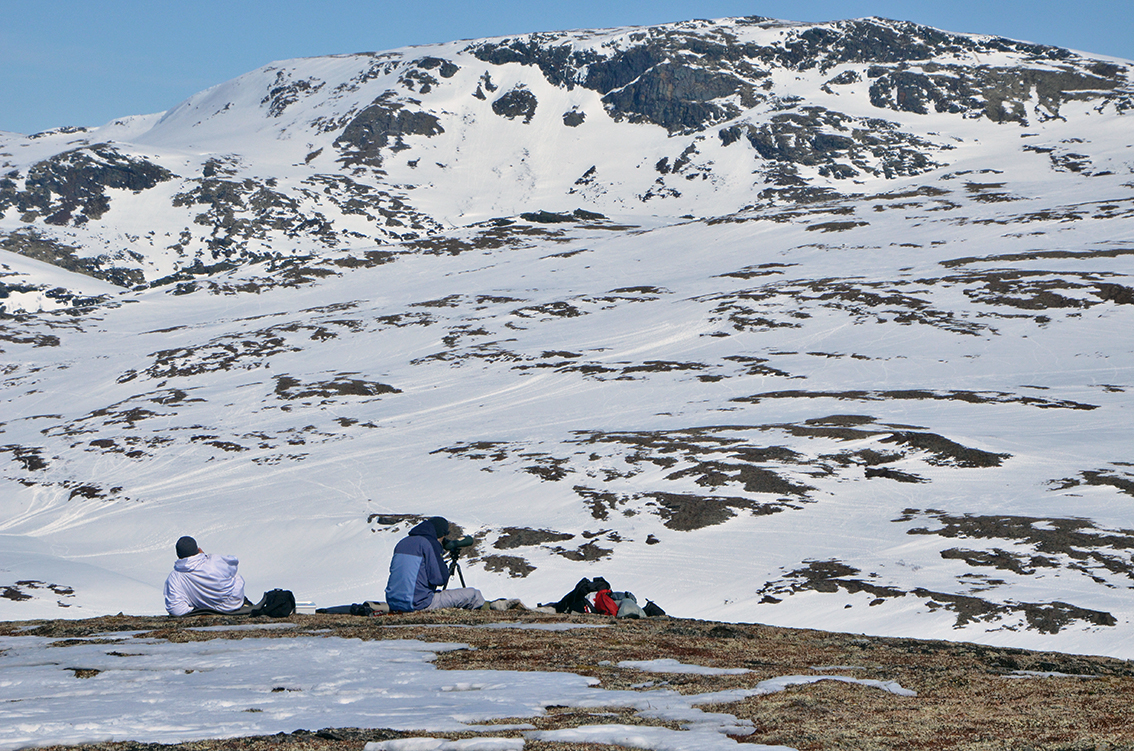 Telling ved Gråkneppan/Kløftin. Foto: Kristin Lund Austvik, Kvikne Utmarksråd.