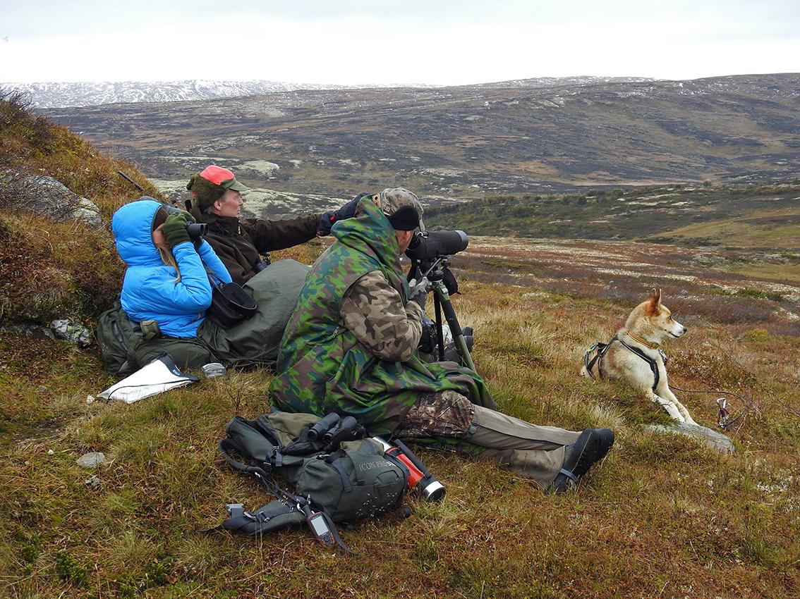 """Nok en flokk telles. Mannskapet har """"pakket seg ned"""" og tellinga gjennomføres. Foto: Ingebrigt Storli"""