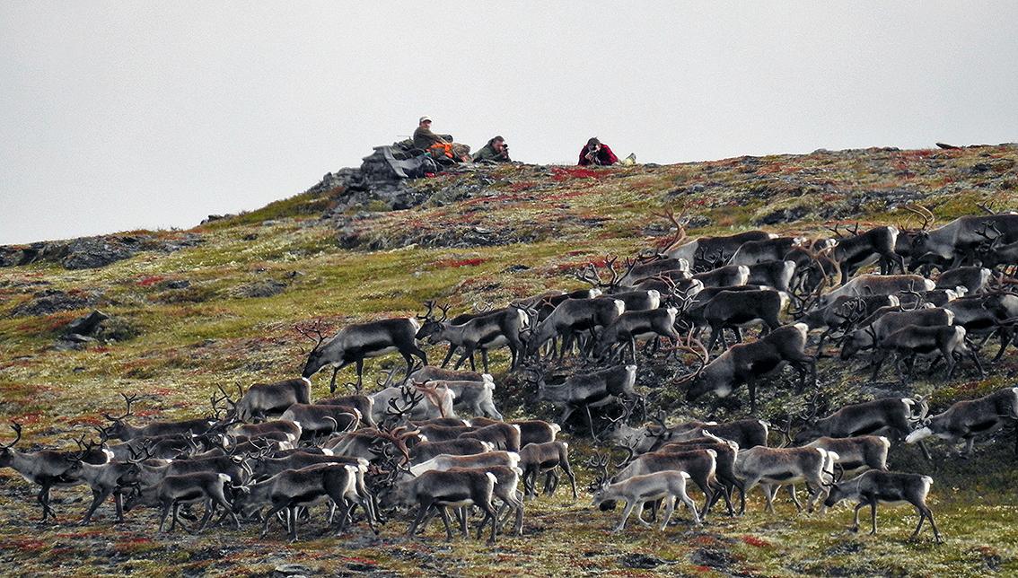 252 jegere ble kontrollert av oppsynet under årets villreinjakt i Forollhogna. Foto: Ingebrigt Storli