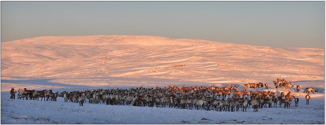 Foto: Ingebrigt Storli