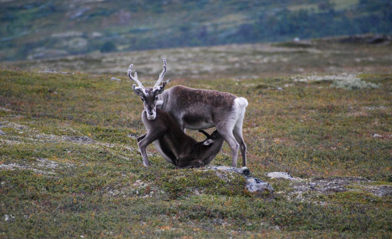 Sjekk bildene som fjelloppsyn Geir Morten Granmo har lagt ut på  områdets Facebook-side . Foto: Geir Morten Granmo