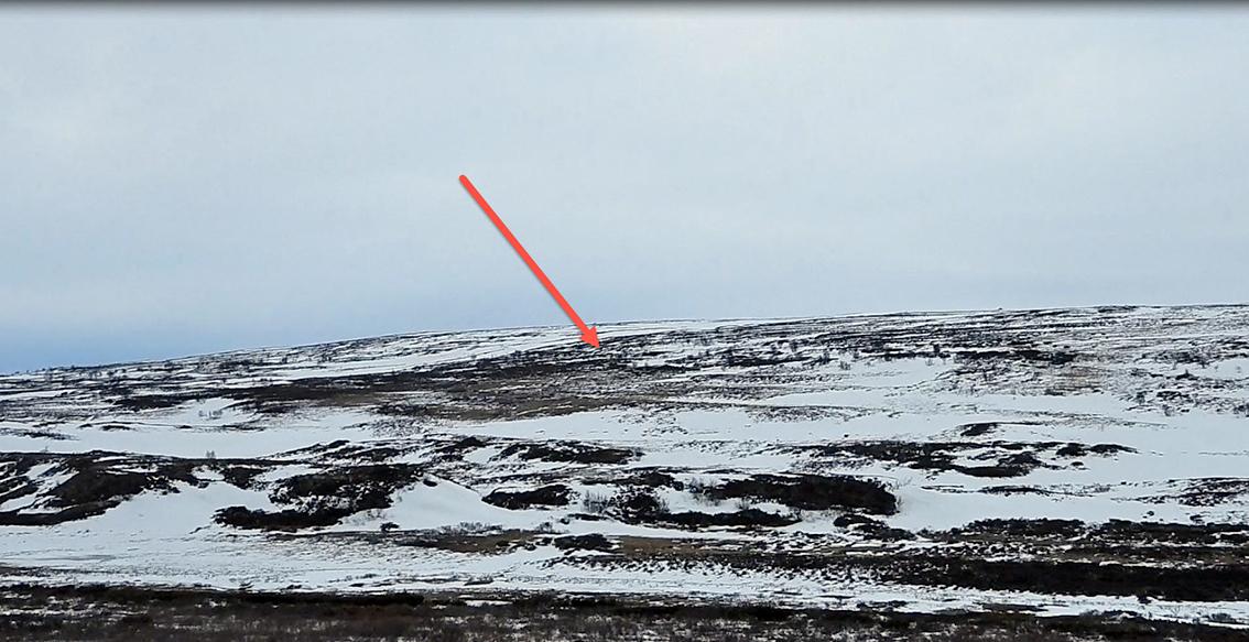 Vi har oppdaget fostringsflokken på den andre siden av dalen (markert med rød pil). Bildene som tas, er høyoppløselige og vi trenger ikke å forflytte oss nærmere. Vi blir værende på stedet. Se de to neste bildene.