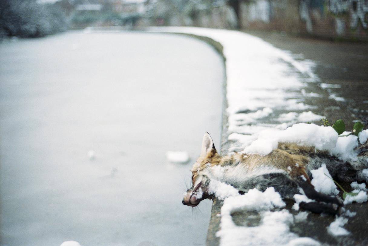 _ Dead Fox
