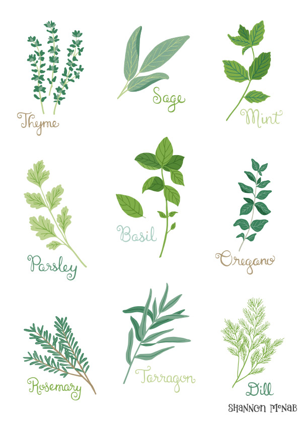 Herb Garden Illustrations by Shannon McNab