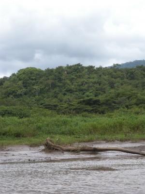 Kan ni se krokodilerna på dessa bilderna?