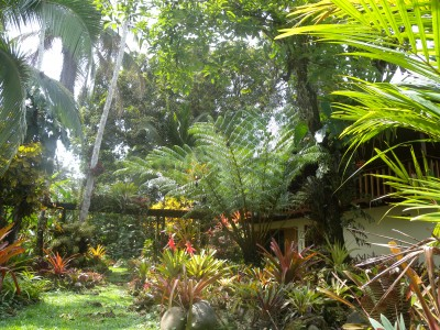 the landlord's garden